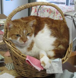 Flossie-in-basket